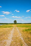 Beautiful landscape. Road to a lonely tree. In field Stock Photography
