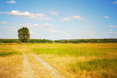Beautiful landscape. Road to a lonely tree. In field Stock Photo