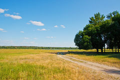 Beautiful landscape. Road to a lonely tree. In field Stock Photos