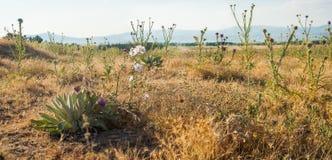 Beautiful landscape in Sandikli, Turkey Royalty Free Stock Images