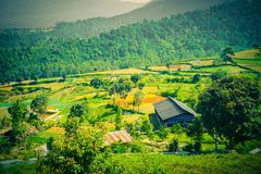 Beautiful landscape scene with mountain foggy amd some farm and tree forest on the highland. Indonesia stock photography