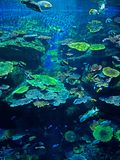 Landscape Scene of Undersea Coral Reef with Sea Fish. Beautiful Landscape Scene of Undersea Coral Reef with Sea Fish Stock Image