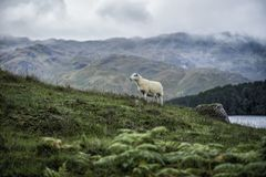 Scotland. Beautiful landscape in Scotland , United Kingdom Royalty Free Stock Photo