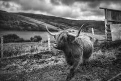 Scotland. Beautiful landscape in Scotland , United Kingdom Stock Image