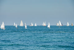 Beautiful landscape of the sea with many sails on the horizon Royalty Free Stock Photography