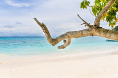 Beautiful landscape sky and blue sea under a green tree and bran Stock Photos