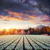 Beautiful landscape sky field and hyacinths. Netherlands, Europe Stock Photos