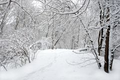 Beautiful landscape with snow-covered path in the forest among the trees on winter day. Beautiful landscape with snow-covered path in the forest among the trees Stock Photography