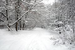 Beautiful landscape with snow-covered path in the forest among the trees on winter day. Beautiful landscape with snow-covered path in the forest among the trees Royalty Free Stock Photography