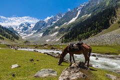 Beautiful landscape of Sonamarg valley with horse eating grass. Beautiful landscape of Sonamarg valley with horse eating green grass beside river as foreground Royalty Free Stock Photo