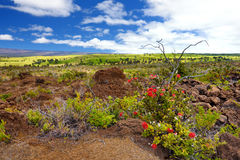 Beautiful landscape of south side of the Big Island of Hawaii Stock Photo