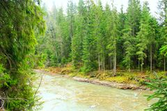 Mountainous river in the forest of Carpathian mountains. Beautiful landscape with speed mountainous river in the forest of Carpathian mountains Stock Photos