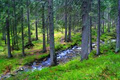 Mountainous river in the forest Stock Photo
