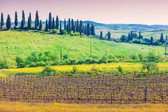 Fields and vineyard on rolling hills in Tuscany, Italy. Beautiful landscape, spring nature. View from above of sunny fields and vineyard on rolling hills in royalty free stock photo