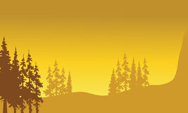 Beautiful landscape spruce Royalty Free Stock Images