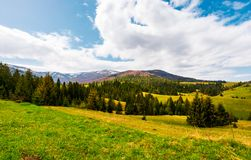 Beautiful landscape with spruce forest. Landscape of Borzhava mountain ridge in springtime. snowy mountain tops in the distance under the cloudy sky stock images