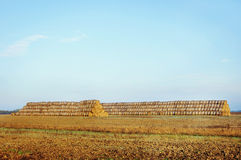 Beautiful landscape with straw bales Royalty Free Stock Image
