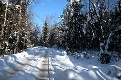 Beautiful landscape with suburban road in snow-covered high trees in the winter forest after snowfall on sunny day Royalty Free Stock Photography