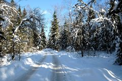 Beautiful landscape with suburban road in snow-covered high trees in the winter forest after snowfall on sunny day Stock Images