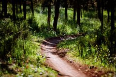 Beautiful green forest. Beautiful landscape summer day forest path Stock Photo