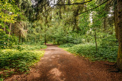 Beautiful Landscape Of Summer Mixed Forest, Park. Path Lane Walkway Way For Walking Royalty Free Stock Photos