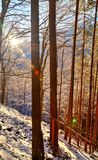 Landscape with sun rays in winter forest stock photography
