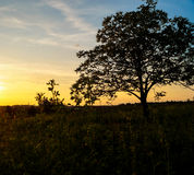 Beautiful landscape sunset field. Beautiful landscape sunset in the field Stock Photography