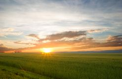 Beautiful landscape at sunset. Green wheat field at sunset. Green Field and Beautiful Sunset stock image