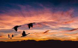 Beautiful landscape on sunset or sunrise with flying birds natur Stock Images