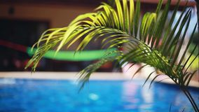 Beautiful landscape palms leaves and changes focus to swimming pool with hammock. 1920x1080, hd Vacation concept stock footage