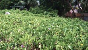 Beautiful landscape at tea plantation. stock video footage