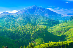 Beautiful landscape of the tea plantations in India Stock Photos