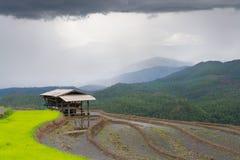 Beautiful landscape terrace rice field and hut when rainy season Royalty Free Stock Image