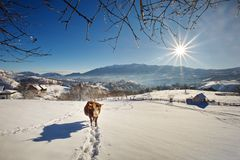 Winter in Pestera Village, Piatra Craiului national park, Brasov, Romania. Beautiful landscape from Transylvania, winter time in the village of Pestera, Moeciu Stock Images