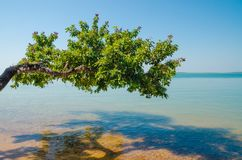Beautiful landscape of tree growing over ocean at beach of Bijagos island Bubaque, Guinea Bissau, West Africa Royalty Free Stock Photography
