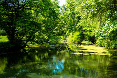 Beautiful landscape trees bowed water. Beautiful landscape trees bowed over the water Stock Photography