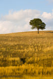 Beautiful landscape, trees and field of Tuscany, Italy Royalty Free Stock Images
