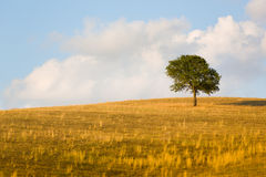 Beautiful landscape, trees and field of Tuscany, Italy Stock Photo