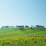 Beautiful landscape with trees on hills in sunny day Stock Photo