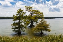 Beautiful landscape with trees and the Mississippi River, in the State of Mississippi. USA royalty free stock photography