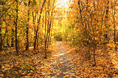 Beautiful landscape with trees and road in autumn forest Stock Images