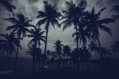 Beautiful landscape tropical beach. Beautiful morning landscape tropical beach. Mirissa Beach. Sri Lanka Royalty Free Stock Photography