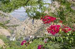 Beautiful landscape tropical flowers against the background of mountains Royalty Free Stock Photo