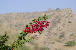 Beautiful landscape tropical flowers against the background of mountains Stock Image