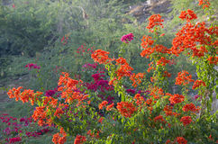 Beautiful landscape tropical flowers against  background of mountains Royalty Free Stock Photos