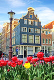 Beautiful landscape with tulips and houses in Amsterdam, Holland Stock Photos