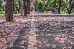 Beautiful landscape view in autumn seasonal of pink flowers fallen on walkway surrounded with green trees in public park. royalty free stock photography