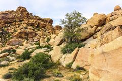 Beautiful landscape view of boulders, red rock formations from the hiking trail in Joshua Tree National Park. American desert. Stock Photography