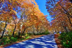 Colorful autumn forest in hot spring resorts of Nyuto Onsenkyo. Beautiful landscape view of colorful autumn forest with blue sky in hot spring resorts of Nyuto royalty free stock photos