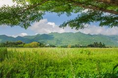 Beautiful landscape view of green field or meadow with mountain and blue sky in the background. Beautiful landscape view of green field or meadow with mountain Royalty Free Stock Image